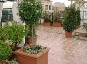 C mo cuidar las plantas en balcones mdz online - Imagenes de terrazas con plantas ...