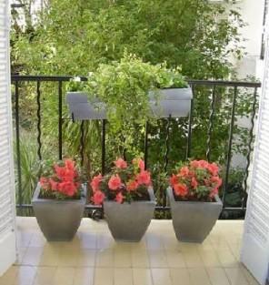 C mo cuidar las plantas en balcones mdz online for Plantas para balcones