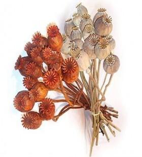 corta las cabezas de las flores dejando un tallo de cm experimenta con margaritas de todos los tipos rosas abiertas o claveles colcalas dejando