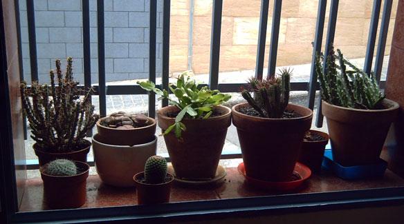 Descubr los secretos de los r sticos y ex ticos cactus for Cactus cuidados interior