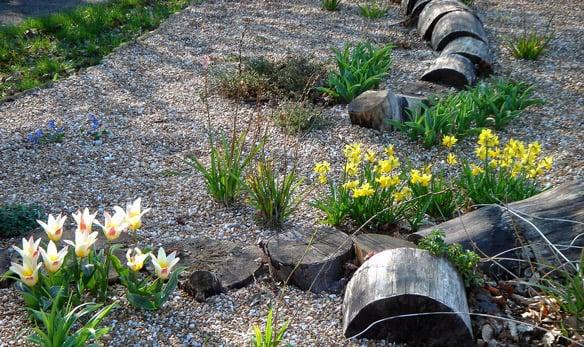 C mo armar un jard n seco mdz online - Recuperar jardin seco ...