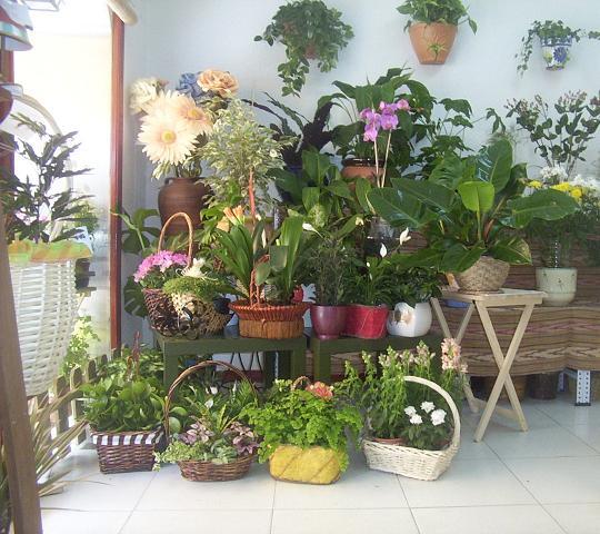 Deco con plantas de interior y arreglos florales mdz online - Plantas de interior online ...