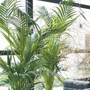 Deco con plantas de interior y arreglos florales mdz online for Palmeras de interior