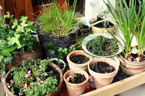 qué vegetales podés cultivar en otoño? - mdz online