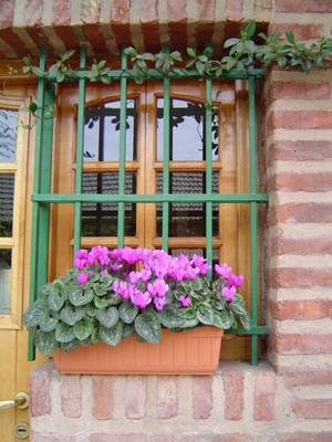 macetas y recipientes para plantas: lo que hay que saber - mdz online