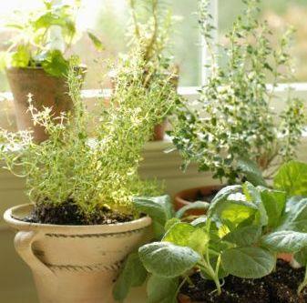 Cre tu propio rinc n verde mdz online - Jardin de aromaticas ...